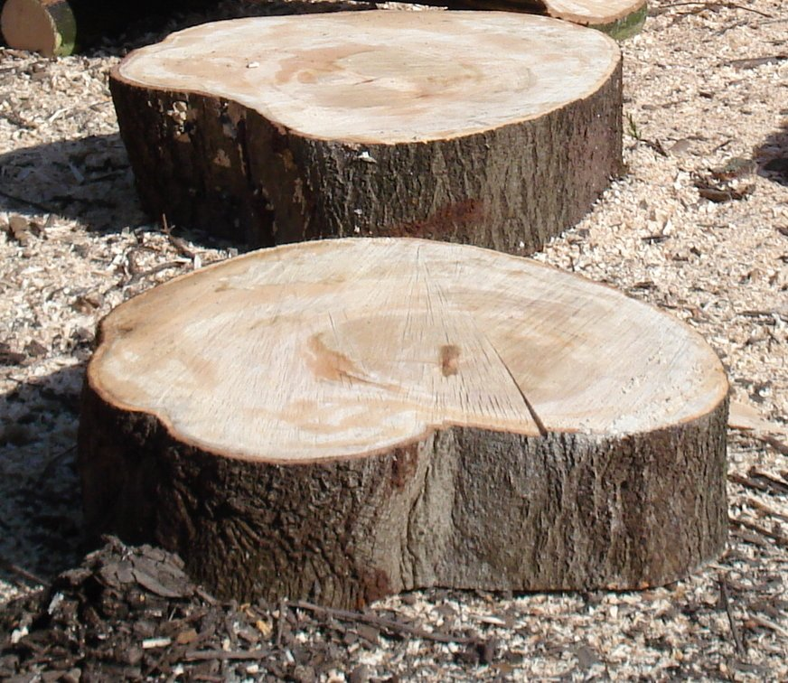 Log slices (stepping stones)